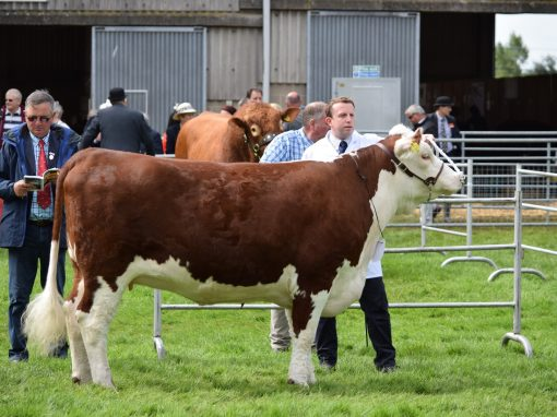 Royal Norfolk Show 2016