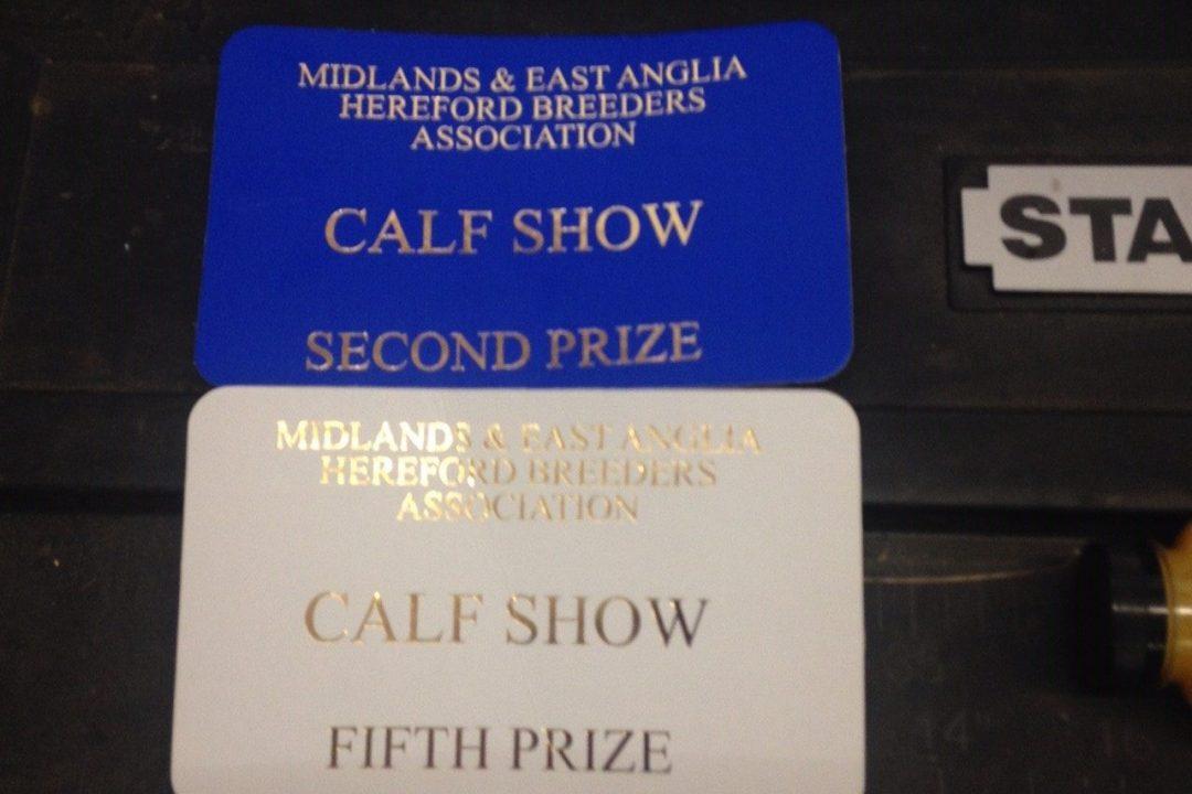 Shows MEAHBA Autumn Calf Show Results