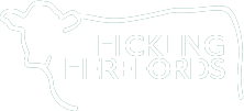 Hickling Herefords